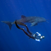 Freediving one day with guide (licensed freedivers)